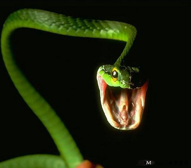 梦虚无之蛇形天下