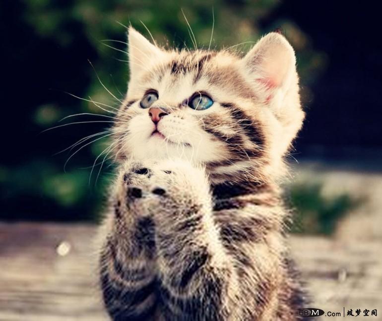 【解梦之鬼神】梦见祈祷 梦到祈祷 健康 病魔缠身 不幸降临