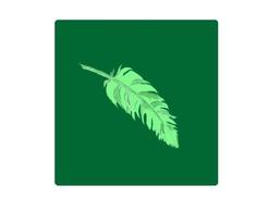【画梦】羽毛
