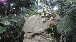 莫斯克大学植物园