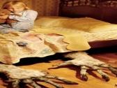 关于梦的9个事实:有人会做清醒梦 动物也会做梦